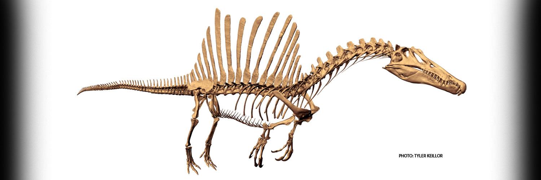 SpinosaurusTOProdBanner_1500x500